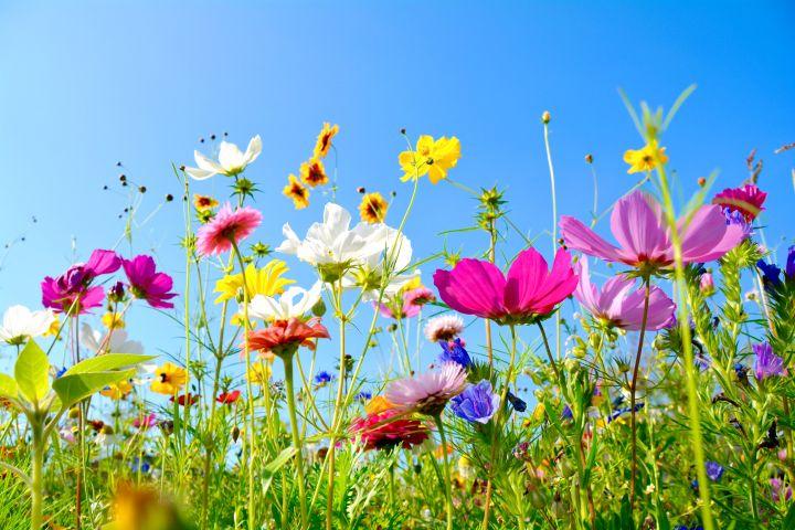 Man erkennt verschiedenste Pflanzen