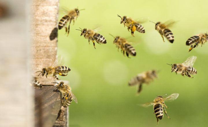 Man erkennt Wildbienen die fliegen