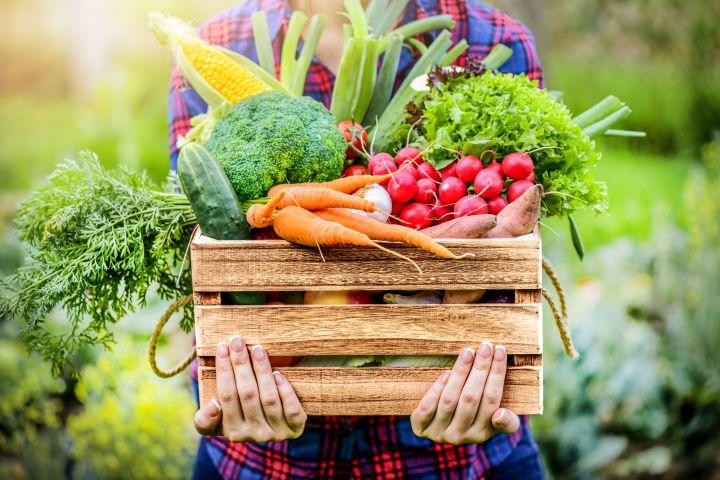 Zu erkennen ist eine Kiste mit Gemüse.