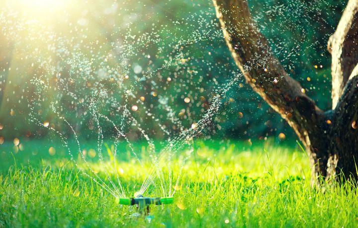 Ein grüner Rasen wird grad bewässert.