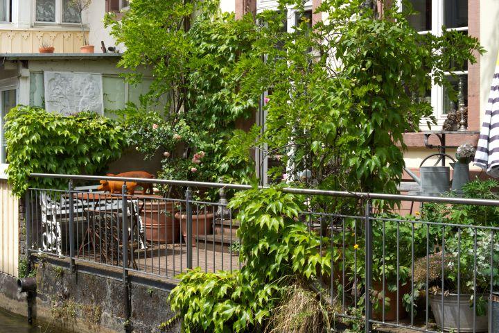 Begrünte Terrasse mit vielen verschiedenen Pflanzen