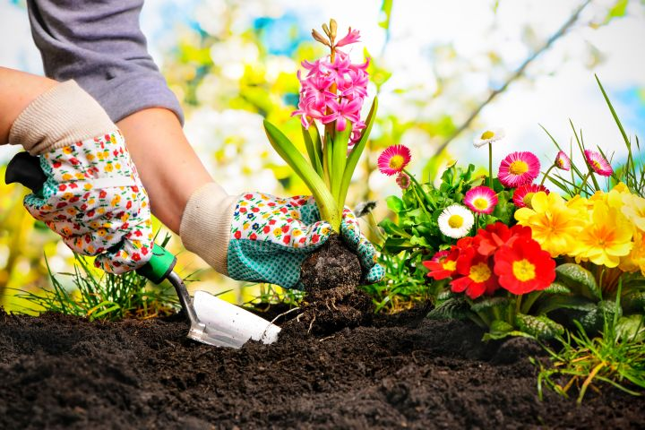 Frühling, Garten, Gartenarbeit, Gartenwerkzeug, Blumen